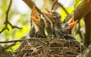 bird nesting after divorce